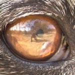 Empatía. Fotografía tomada a través del ojo de un galgo español. PVP. 40 €