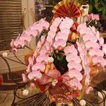 正月飾り胡蝶蘭