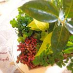 涼しげな観葉植物