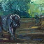 Wasserbüffel und Reisbauern