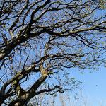 The branches.... (Sherkin Island, Co. Cork)