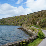 At Lough Hyne, Co. Cork