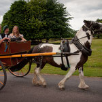 Jaunting car ride with Michael, Muckross House and Gardens, Co. Kerry