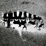 Zoo- The Bronx, New York, USA (2005)