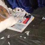 Honey liest Zeitung