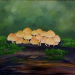 Pilze (Öl auf Hdf 50x40)