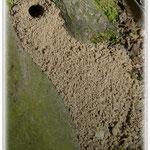 Tiefbau eines Insekts - Wald am Böllenfalltor © Jennie Bödeker