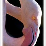 Flamingo - Vivarium Darmstadt © Jennie Bödeker
