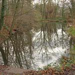 Frei gelegtes Ufer am Judenteich