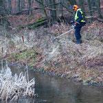 Zunehmender Uferbewuchs am Ersatzgewässer