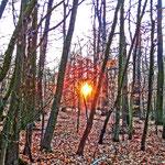 Sonnenaufgang im Ostwald