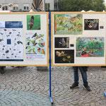 Informationstafeln zu Vögeln und Fledermäusen