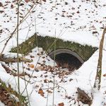 Pausenentdeckung: Fuchsversteck im Rohr