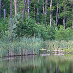 Zufluchtsort für einige Wasservögel