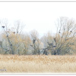 Kolonie von Störchen, Reihern und Kormoranen - Reinheimer Teich © Jennie Bödeker