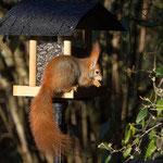 Frisst Vögel und Vogelfutter - Garten auf der Rosenhöhe © Anke Steffens