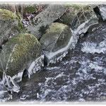 Winterliches Gersprenzufer - Reinheimer Teich © Jennie Bödeker
