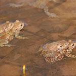 Auch im Teich als Paare