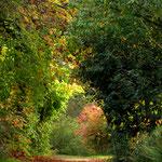Herbstweg im Botanischen Garten © Jennie Bödeker