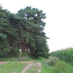An der Waldgrenze in Richtung Arheilgen