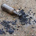 Käferfalle: Bierrest lockt Insekten in die Flasche