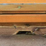 Neue Bewohner: Honigbienen