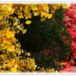 Herbst in Reggae-Farben - Botanischer Garten © Jennie Bödeker