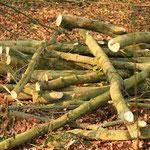 Rohmaterial für die Holzpfosten