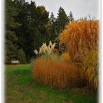 Gräserinsel - Botanischer Garten © Jennie Bödeker