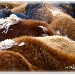 Winterfell der Schafe - Odenwald © Jennie Bödeker
