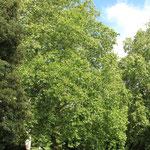 Hoher Baumbestand garantiert Vögeln Freiraum
