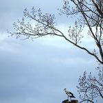 Eroberung für gute Aussicht - Reinheimer Teich © Marlen Wesemeyer