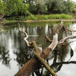 Blick auf den Teich mit potenziellen Vogelansitzen