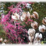 Physalis - Botanischer Garten © Jennie Bödeker