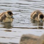 Paddeltour auf dem Teich