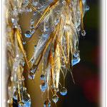 Tauendes Eis im Schilf - Reinheimer Teich © Jennie Bödeker