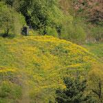 Gelb und Grün dominieren