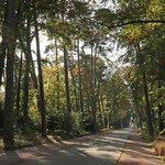 Ein sonniger Herbstmorgen auf dem Waldfriedhof