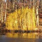 Sonnenfarben am Fischteich