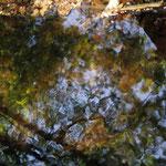 Spiegelnder Froschlaich - Melita-Brunnen Eberstadt © Matthias Lothhammer