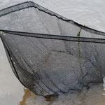 Fischer am Westufer