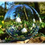 Märzenbecher - Botanischer Garten © Jennie Bödeker