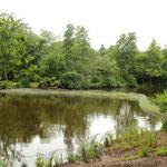 Versuch, die Verschlammung des Teichs zu vermindern