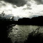 Schilfgürtel um den Reinheimer Teich © Jennie Bödeker