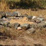Eidechsenfeld, auch Fundort einer Schlangenhaut