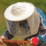 Ismail Suleiman bei der Kontrolle seiner Bienenstöcke