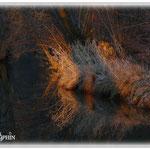 Wintersonne auf der Gersprenz © Jennie Bödeker
