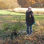 Eva Mund sammelt den Baumschnitt ein