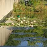 Teich neben der Cafeteria