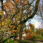 Reste des Herbstlaubs - Botanischer Garten © Jennie Bödeker